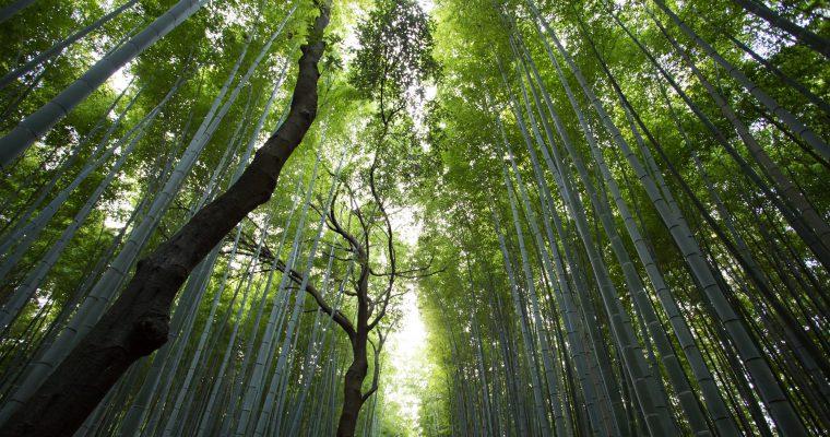 Priroda govori: Moćna poruka planete [VIDEO]