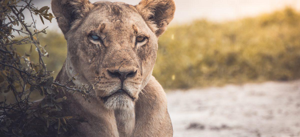 Životinjske vrste istrebljene u 2018. godini