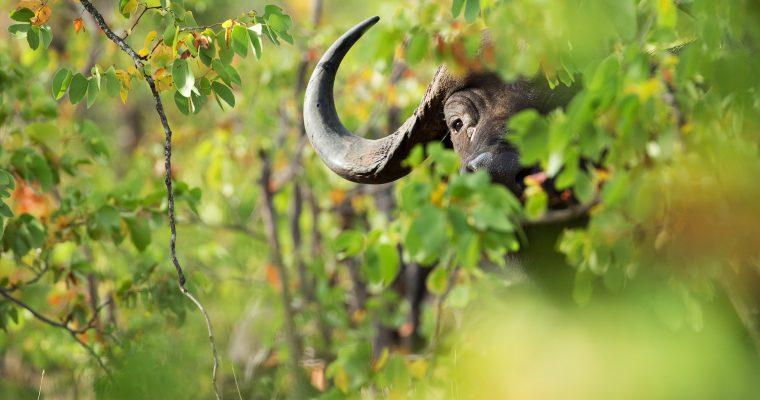 Antropocen: Doba novog izumiranja