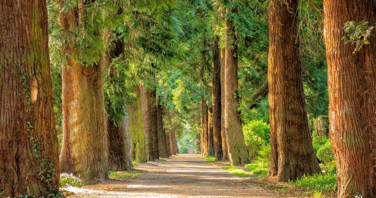 Što više zelenila – to manje stresa, kaže nauka